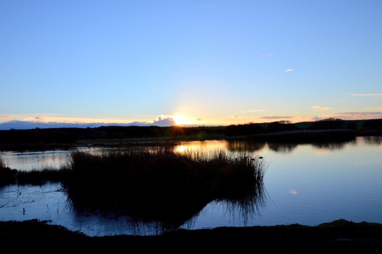 Scenery- Pond 1