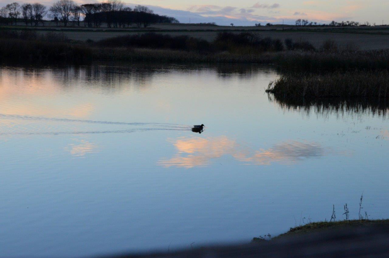 Scenery- Pond 2